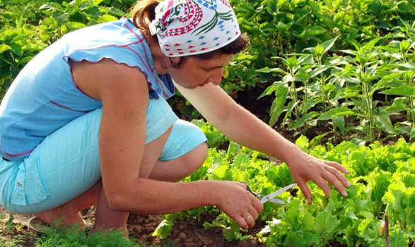 gardening-for-healthy-eating-587x350