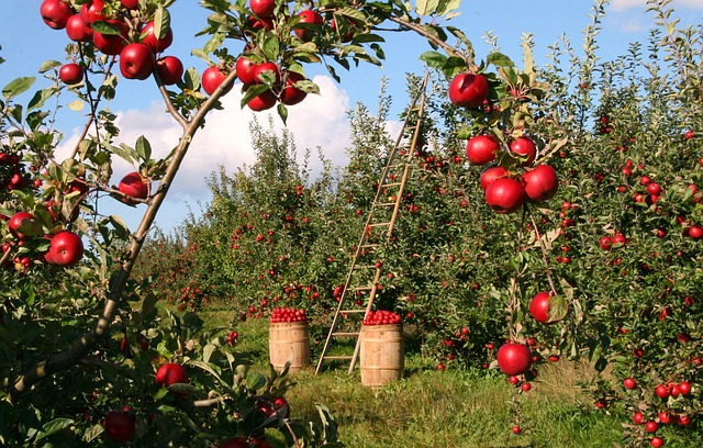 eco-friendly apple orchard