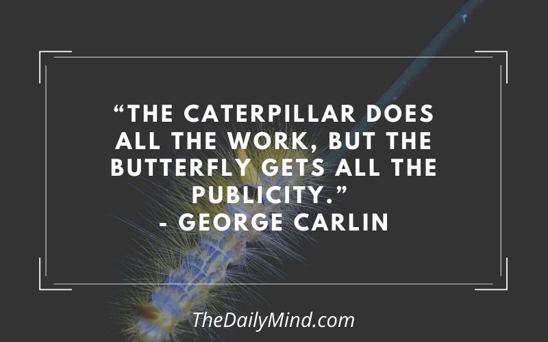 Featured image for caterpillar carlin